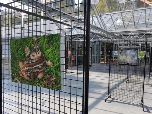 Fototentoonstelling 'Bos in beeld' met foto's van Ludo Goossens in Het Leen in Eeklo