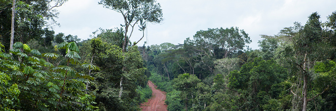 Un rapport du WWF met en évidence le lien entre la pandémie de COVID-19 et la destruction de la nature