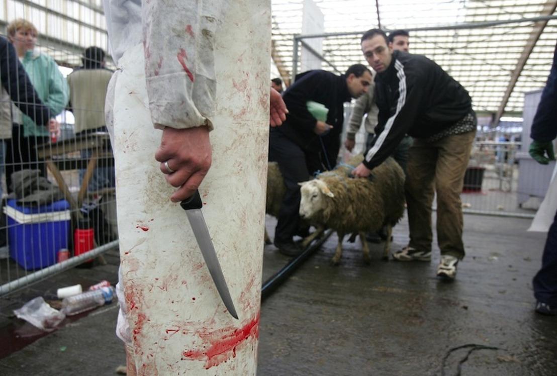 GAIA a déposé une plainte contre les sites d'abattage temporaires à Bruxelles