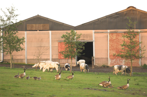 Provincie bevordert wisselwerking landbouw en natuur