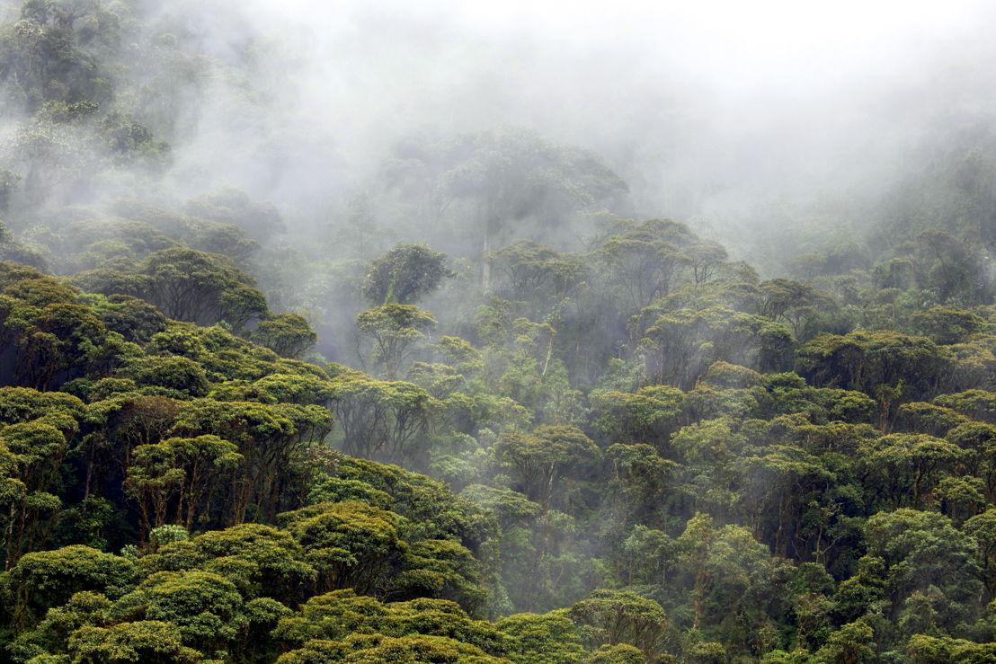 Selva tropical en Ecuador