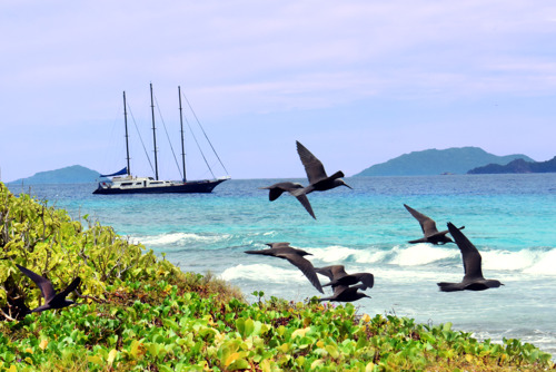 Why 2019 is Officially the Year of Seychelles