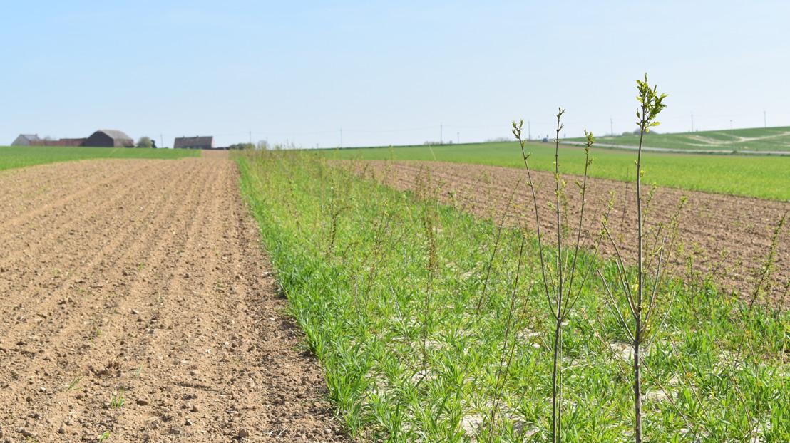"""""""De heggen zorgen voor een evenwicht tussen moderne landbouw, landschap, biodiversiteit en maatschappij"""""""