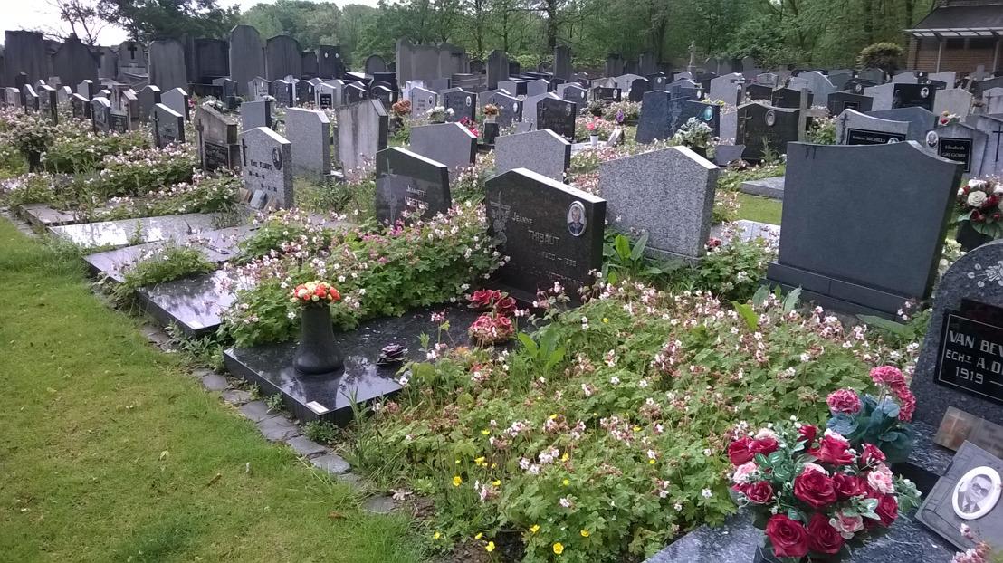 Onderzoek Natuurpunt over onkruidbestrijding kerkhoven bevestigt beleid provincie