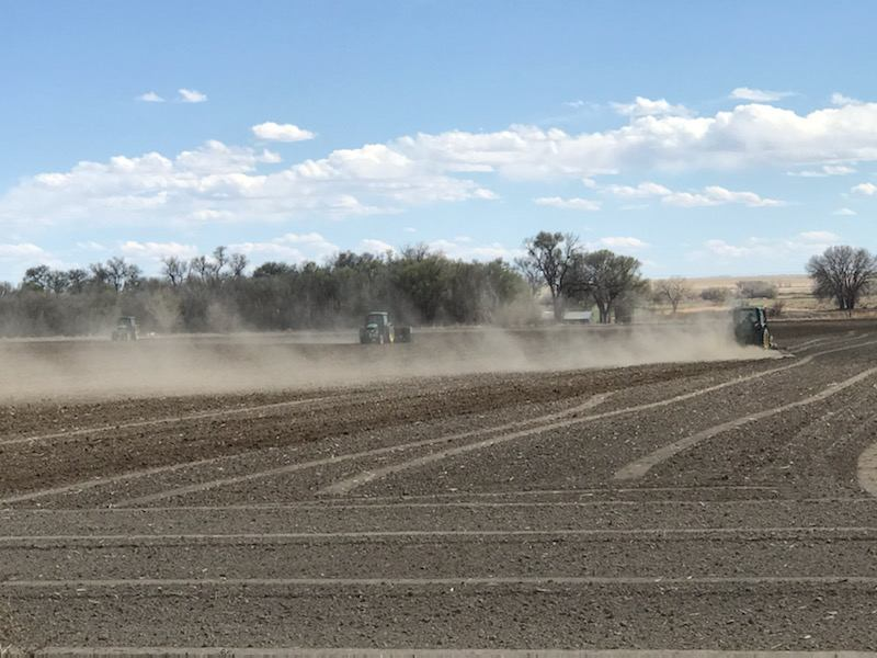 A great Rocky Ford Cantaloupe season starts with working the ground to prepare it for planting, laying down drip lines and row covers, and finally, planting seeds and seedlings that will grow into those sweet and juicy Rocky Ford Cantaloupe, Watermelon and Honeydew melon that Rocky Ford is famous for!