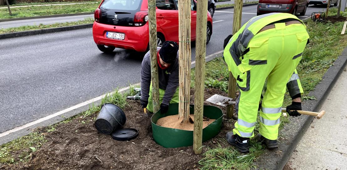 Bruxelles Mobilité plante et verdurise la ville