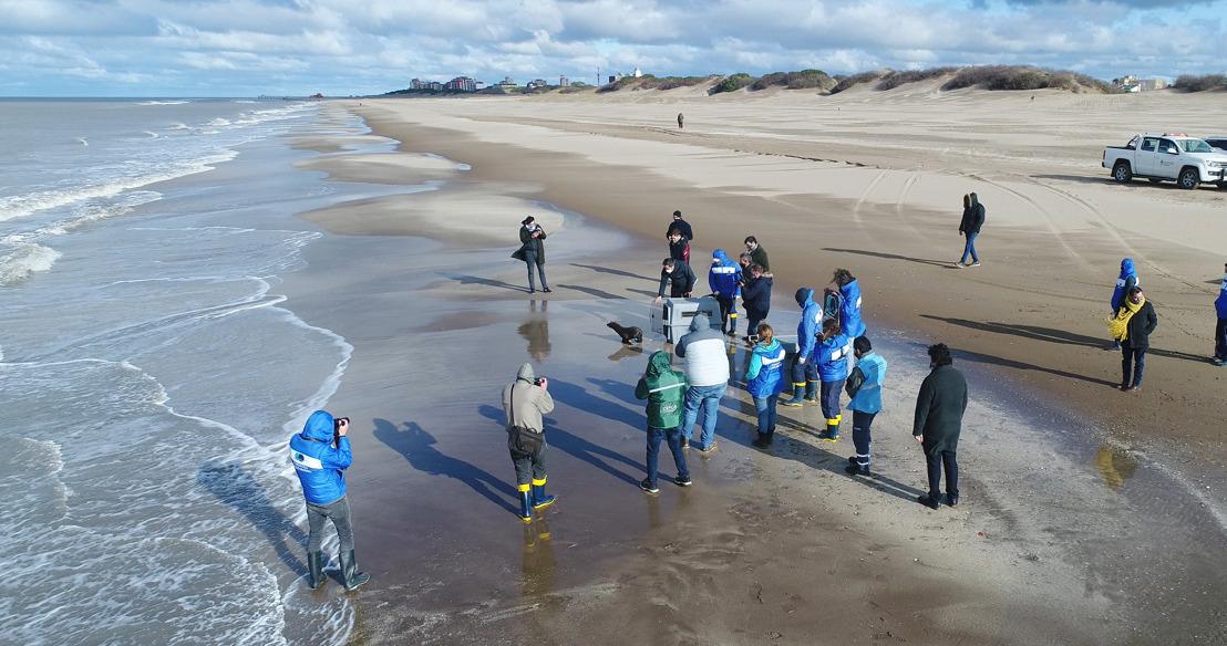 Regresaron al mar el elefante y los lobos marinos rescatados en Gualeguaychú, Escobar y Tigre