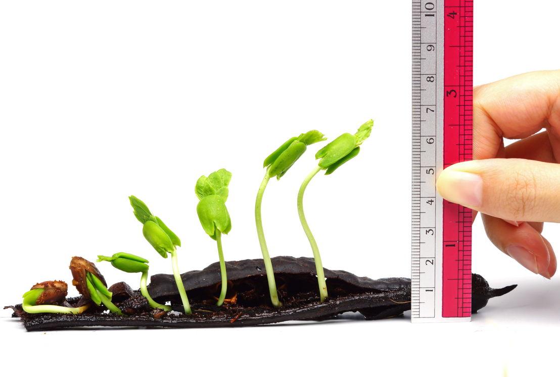 Graph and grow garden