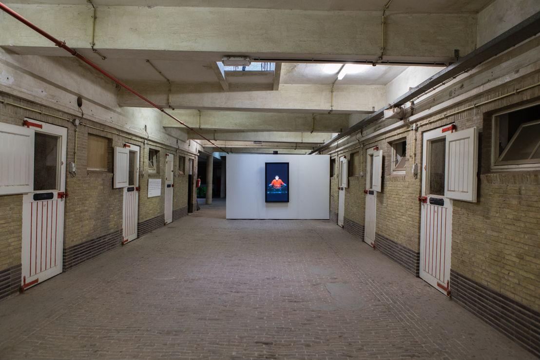 Wellington Hippodroom - stallingen