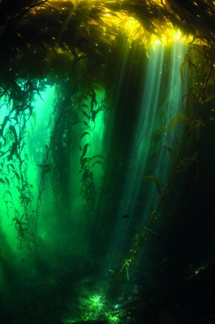 Afl 5: Green Seas - (c) BBC