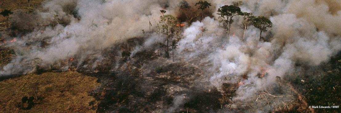 La forêt amazonienne brûle, mais le président brésilien fuit ses responsabilités, déclare le WWF.