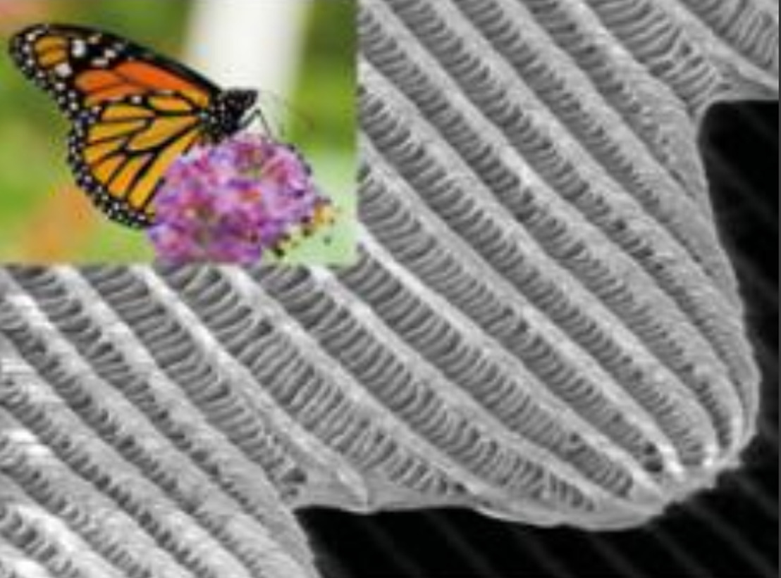 Vlindervleugels inspireren doorbraak in onderzoek fotonische kristallen