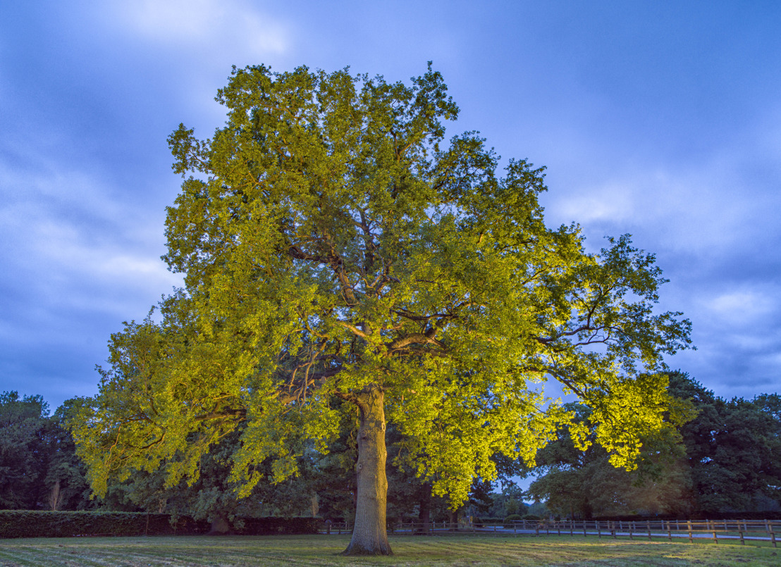 ADRIAN HALLMARK'S FAVOURITE OAK FEATURES IN A PORTRAIT OF A TREE, A PHOTOGRAPHIC CELEBRATION OF BRITISH TREES BY ADRIAN HOUSTON