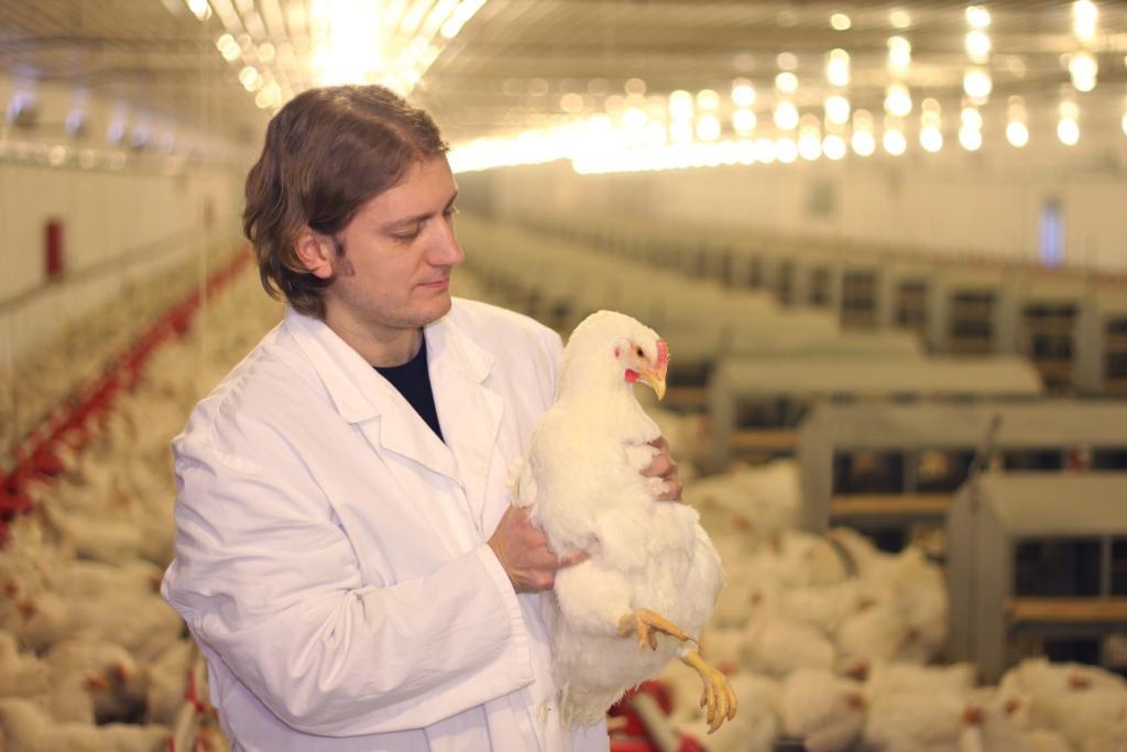 Il pollo italiano non cresce ad antibiotici