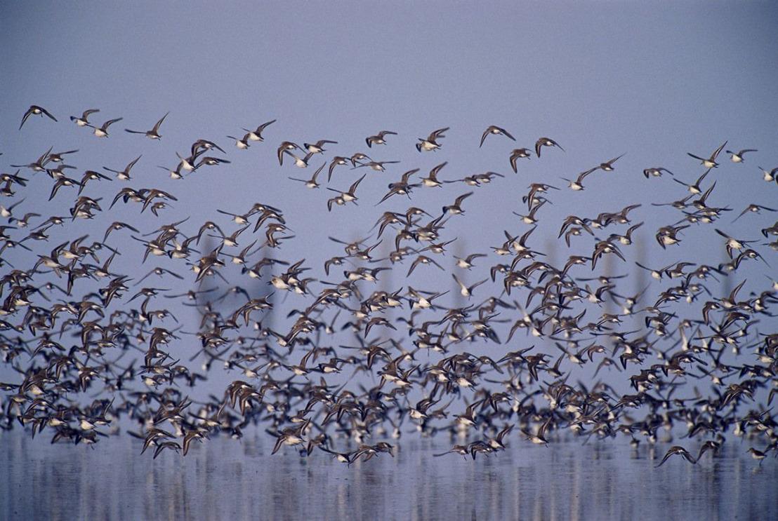 Spanje faalt in de bescherming van Coto de Doñana