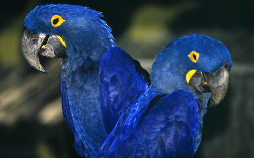 Nieuwe studies brengen online handel in wilde dieren in België en potentiële technologische oplossingen in kaart