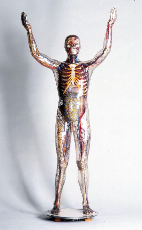 Franz Tschackert, L'homme de verre, 1930 © Deutsches Hygiene Museum, Dresde, inv. Volker Kreidler 1962.