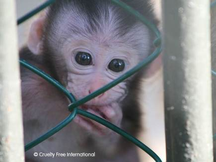 Cruelty Free International_Mauritius monkey farm infant
