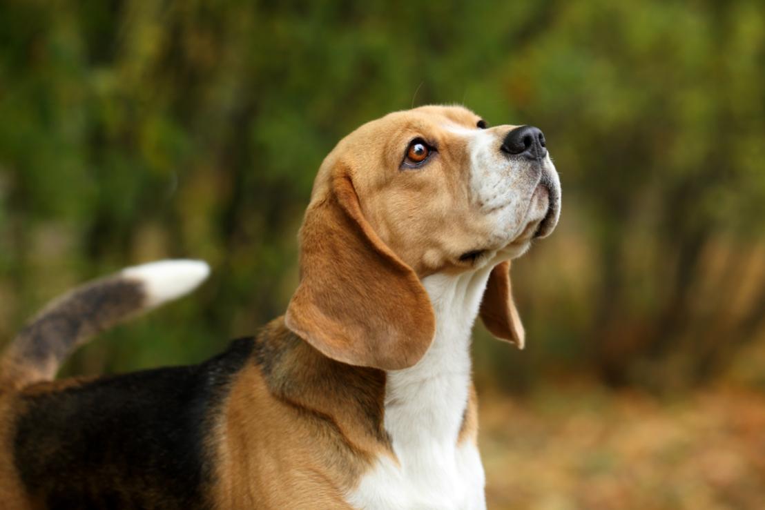 'Pootitie' voor verbod op dierproeven op honden en katten