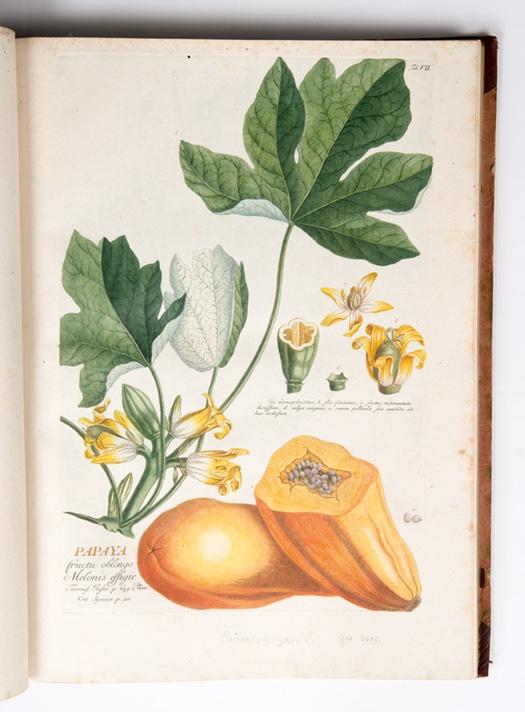 Botanische collectie