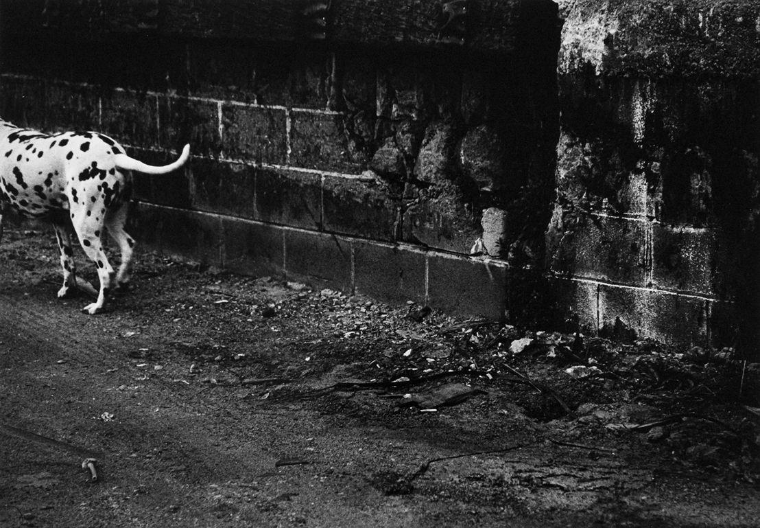 Reiko Imoto, Parallellism, 2000.