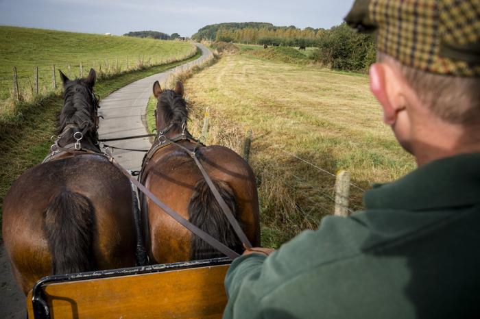 Brabants trekpaard op Autovrije Zondag in Leuven