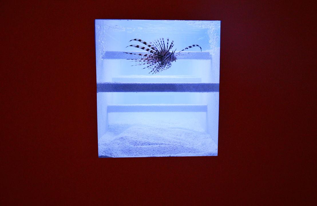 Aquarium (Genf), 2011/2014 © foto: M - Museum Leuven