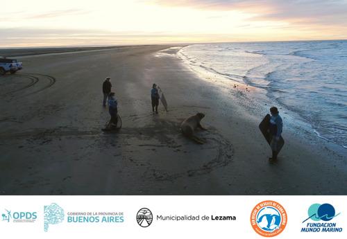 Un elefante marino encontrado en Lezama pudo volver al mar
