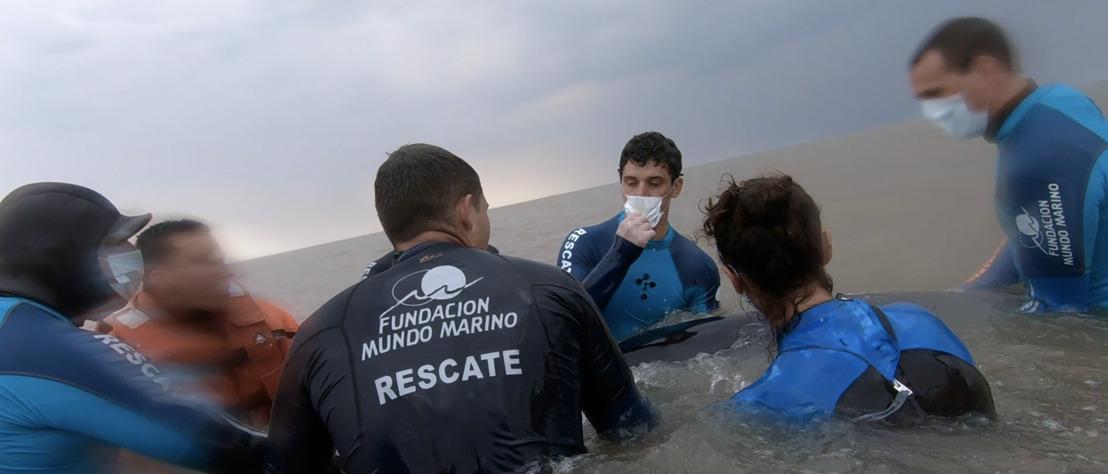 Regresan al mar a una ballena Minke varada en Punta Rasa