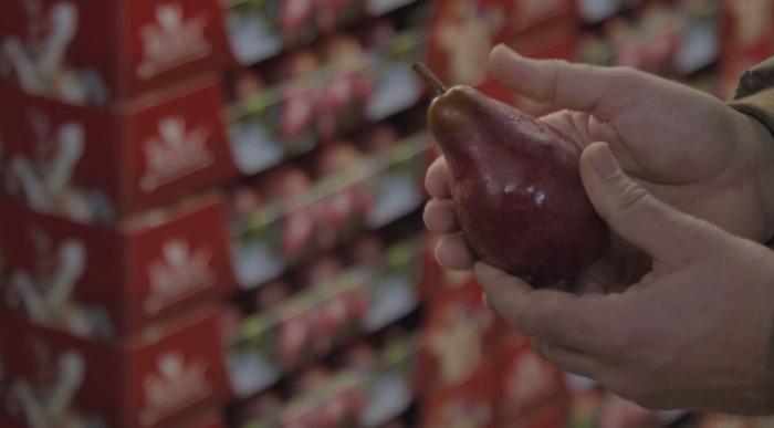 Eerste bloedrode Haspengouwse peer exclusief te koop bij Lidl