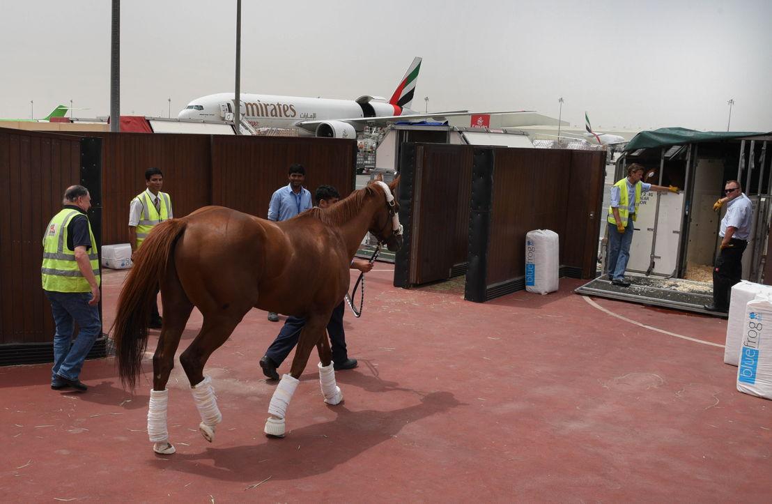 Emirates SkyCargo flies Dubai World Cup winner, California Chrome, home to the United States