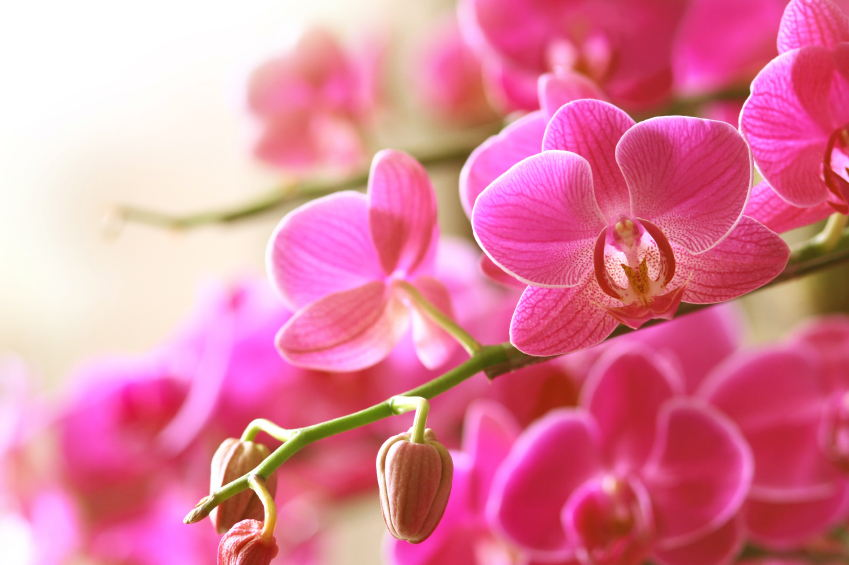Growing & Repotting Orchids (photo credit Pike Nurseries)