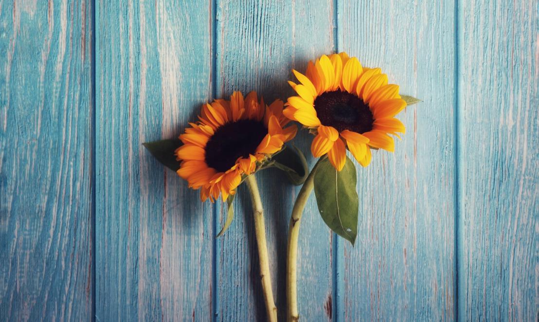 Díselo con flores: Una guía para sorprender con flores a los que más quieres