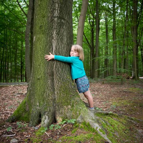 Provincie Vlaams-Brabant start rondetafelgesprekken voor oprichting Nationaal Park Brabantse Wouden