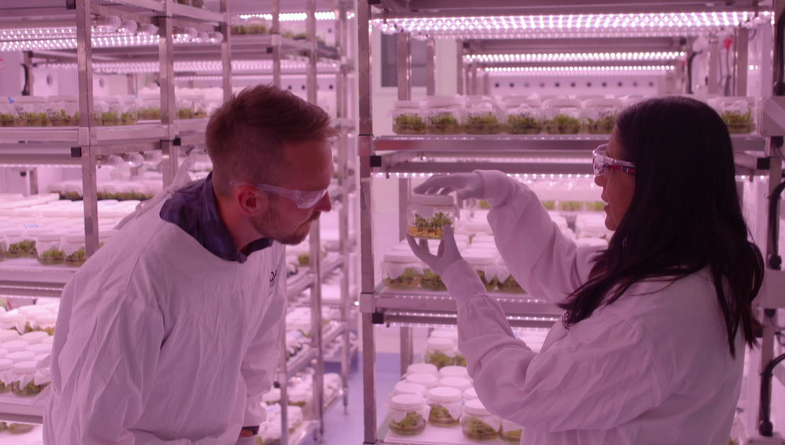 "Paul West inside an avocado breeding lab for ""Catalyst: Feeding Australia""."