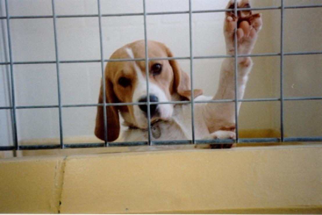 GAIA trekt aan alarmbel: 20.000 proefdieren meer in Vlaanderen
