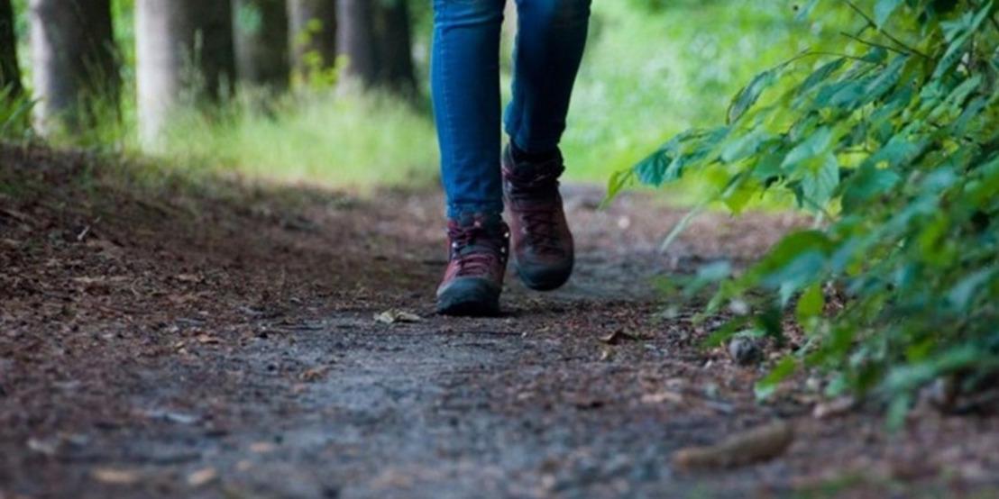 Ruiteren, mennen en wandelen in de Assebroekse meersen zaterdag 22 september