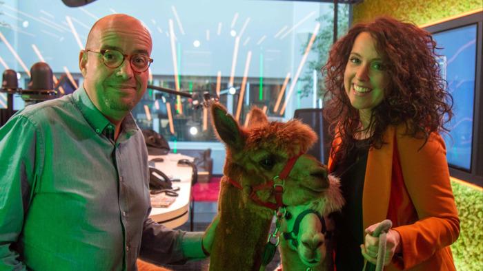 Preview: VIDEO: Joe-dj Sven verrast Anke met alpaca's in de studio
