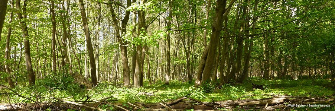 Le WWF salue l'inscription de la Forêt de Soignes au Patrimoine naturel de l'UNESCO, une première en Belgique