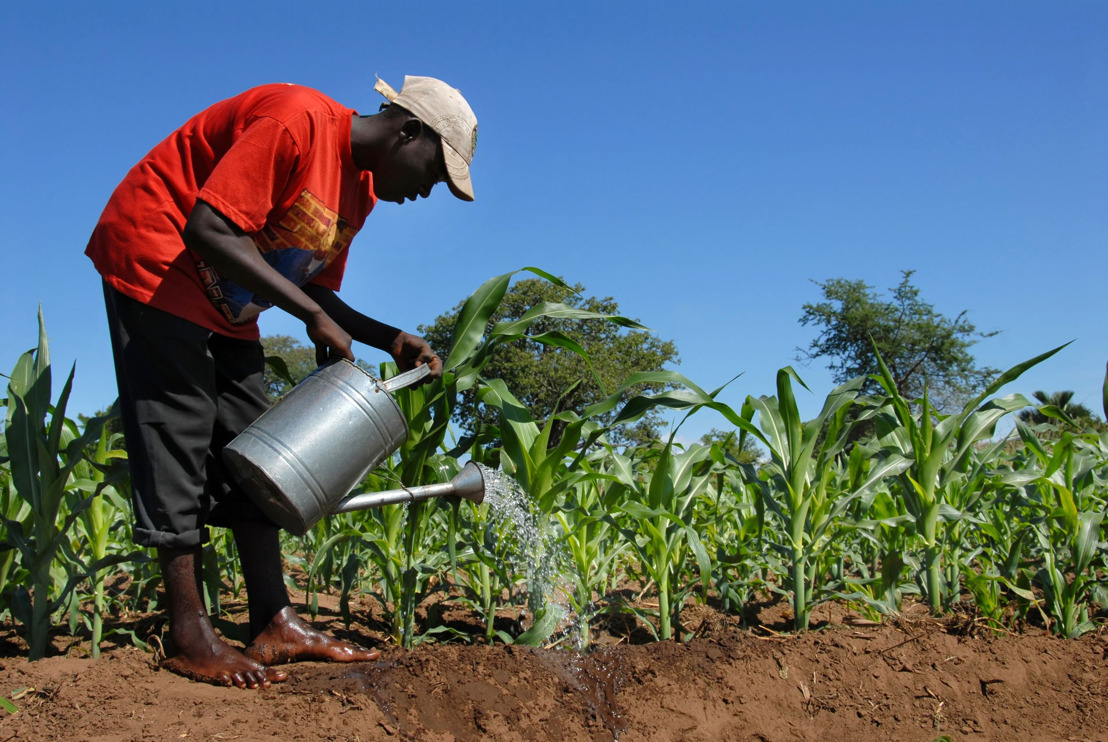 Droughts, Hurricanes, Pandemic, and Hope: Current realities impacting Caribbean Agriculture
