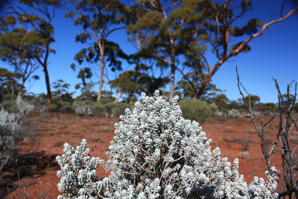 Carbon dioxide released by plants every year is now estimated to be about 10 to 11 times the emissions from human activities, rather than the previous estimate of five to eight times. Image: Owen Atkin, ANU