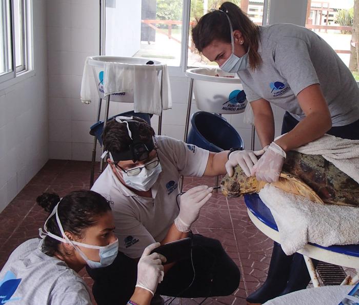 Regreso al mar: así salvaron a dos tortugas cabezonas atrapadas en redes de pesca