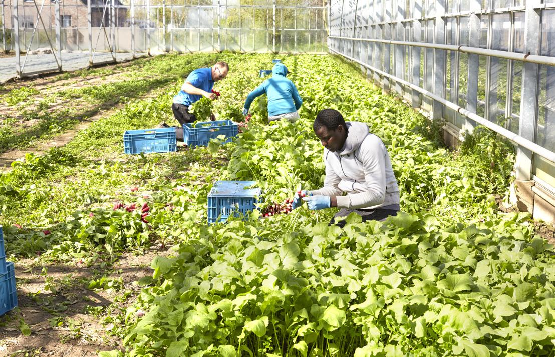 Colruyt Group s'engage en faveur de la production bio locale par un partenariat unique avec l'entreprise agricole bio De Lochting
