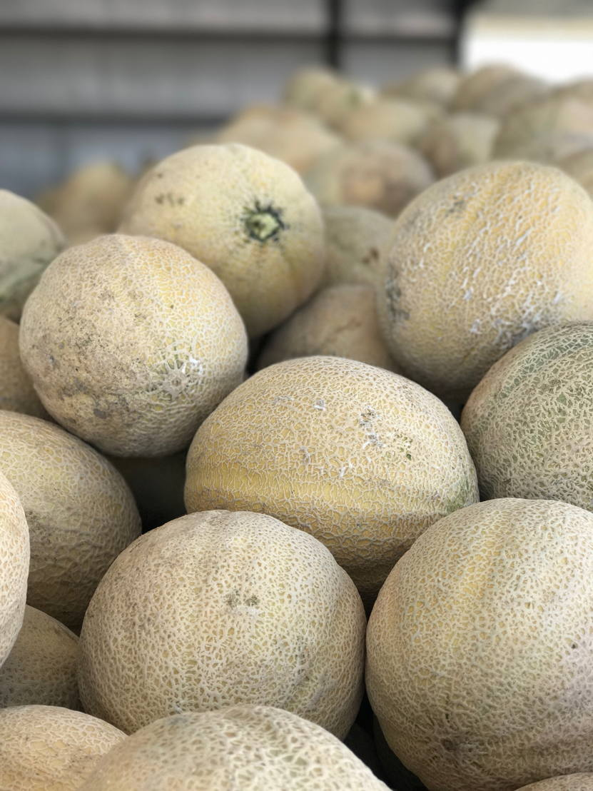 Rocky Ford Cantaloupe in the packing shed during the 2017 season