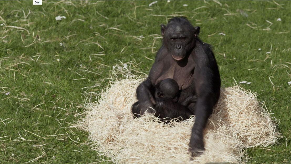 Leve de zoo!, met Arnout Hauben (c) VRT