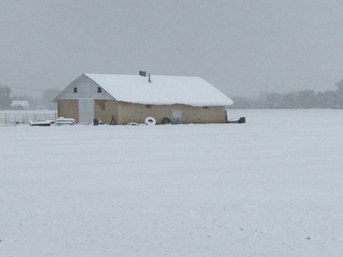 PHOTOS AND VIDEO: Rocky Ford Growers Association farmers survey snow-covered fields