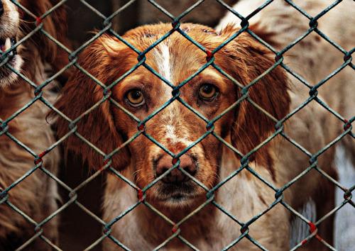 GAIA en dierenasiel Sint-Truiden vragen duidelijke richtlijnen om de goede werking van de dierenasielen niet onmogelijk maken