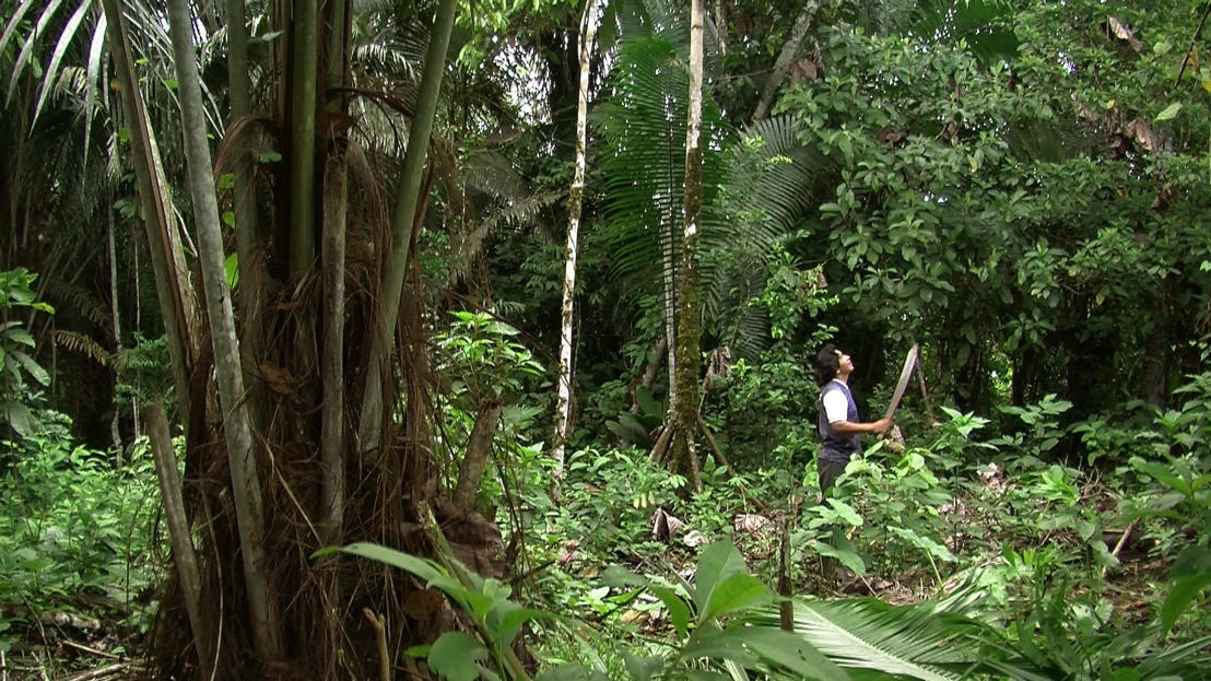 Ursula Biemann & Paulo Tavares, Forest Law, video still.