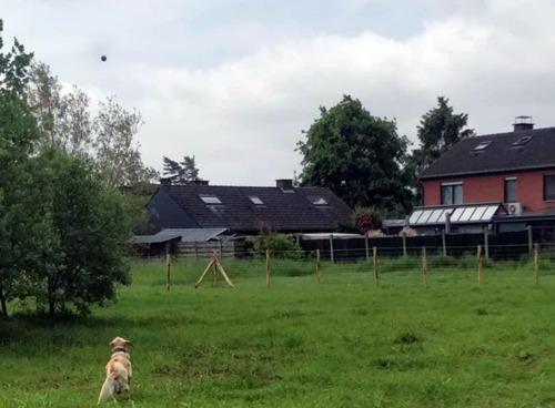 Nieuwe hondenlosloopweides in Wilsele en Wijgmaal