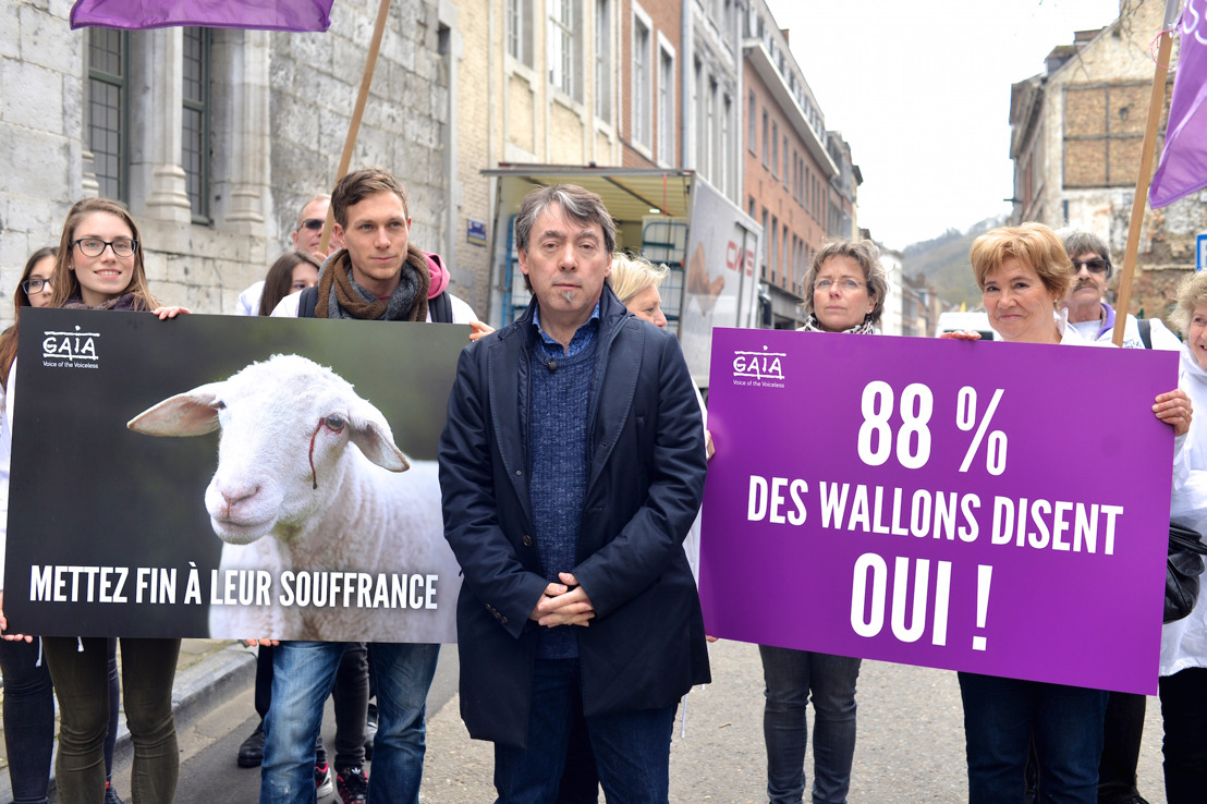 Vote au Parlement wallon sur l'abattage sans étourdissement reporté